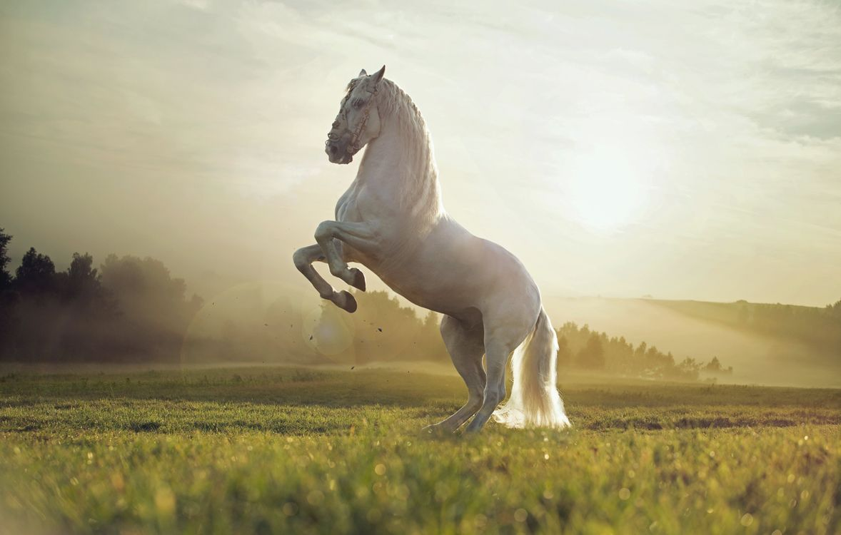 White horse on the field · free photo