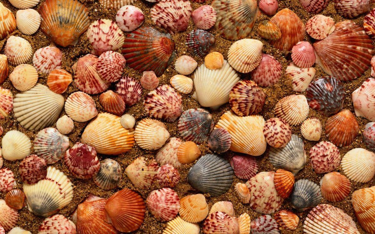 Обои ракушки, море ракушек, песок картинки на телефон