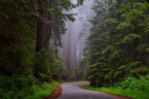 Бесплатные фото лес,деревья,дорога,туман,пейзаж
