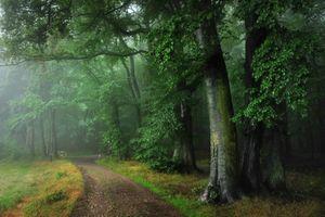 Фото бесплатно туман, пейзаж, дорога