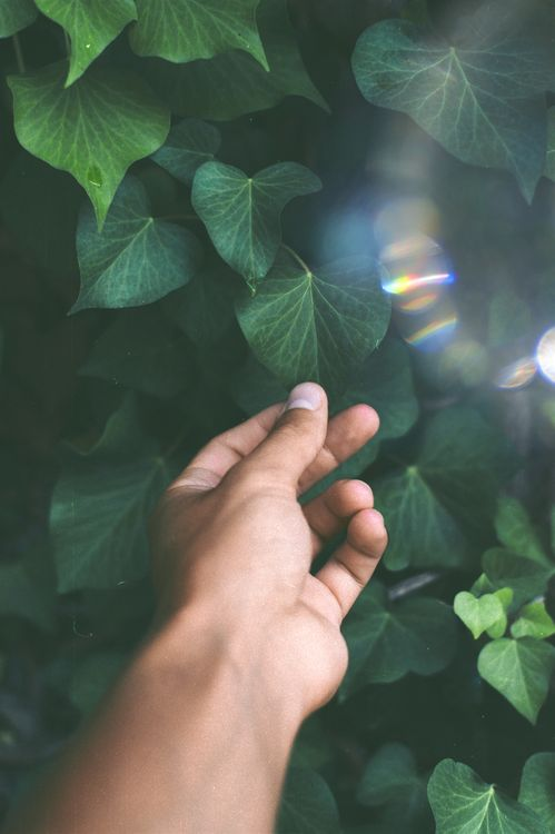 Фото бесплатно light, sunlight, sun, hand, man, finger, mello, green, leaf, inspiration, vein, fragile, delicate, gentle, color, разное