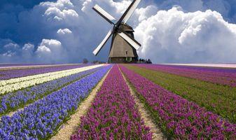 Фото бесплатно поле, цветок, цветущее растение