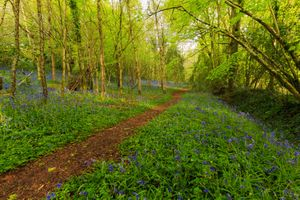 Бесплатные фото лес,деревья,тропинка,цветы,природа,пейзаж