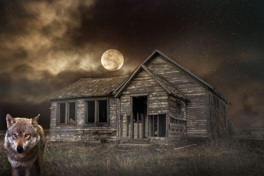 Бесплатные фото ночь,луна,небо,волк,дом,руины,пейзаж,таинственный