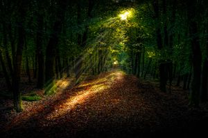 Бесплатные фото дерево,природа,лес,дорожка,трава,легкий,небо