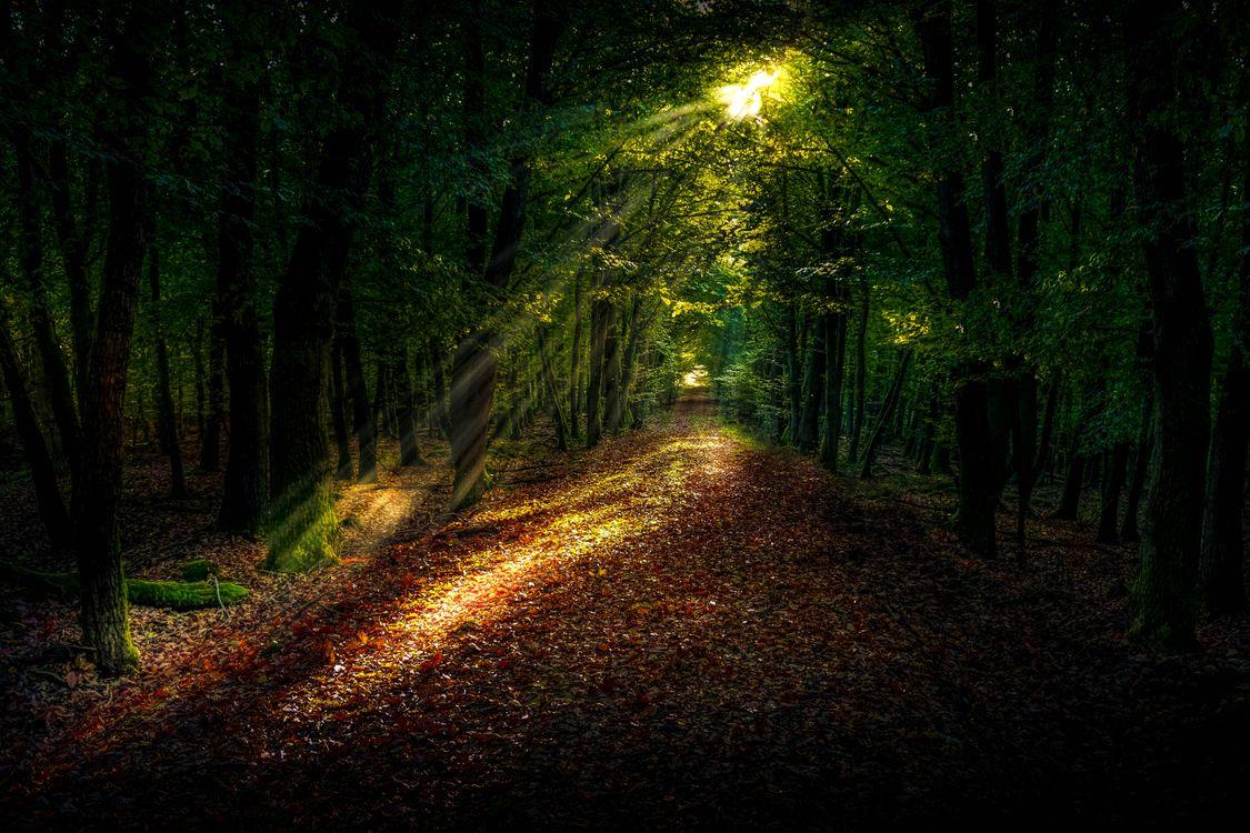 Фото бесплатно дерево, природа, лес, дорожка, трава, легкий, небо - на рабочий стол