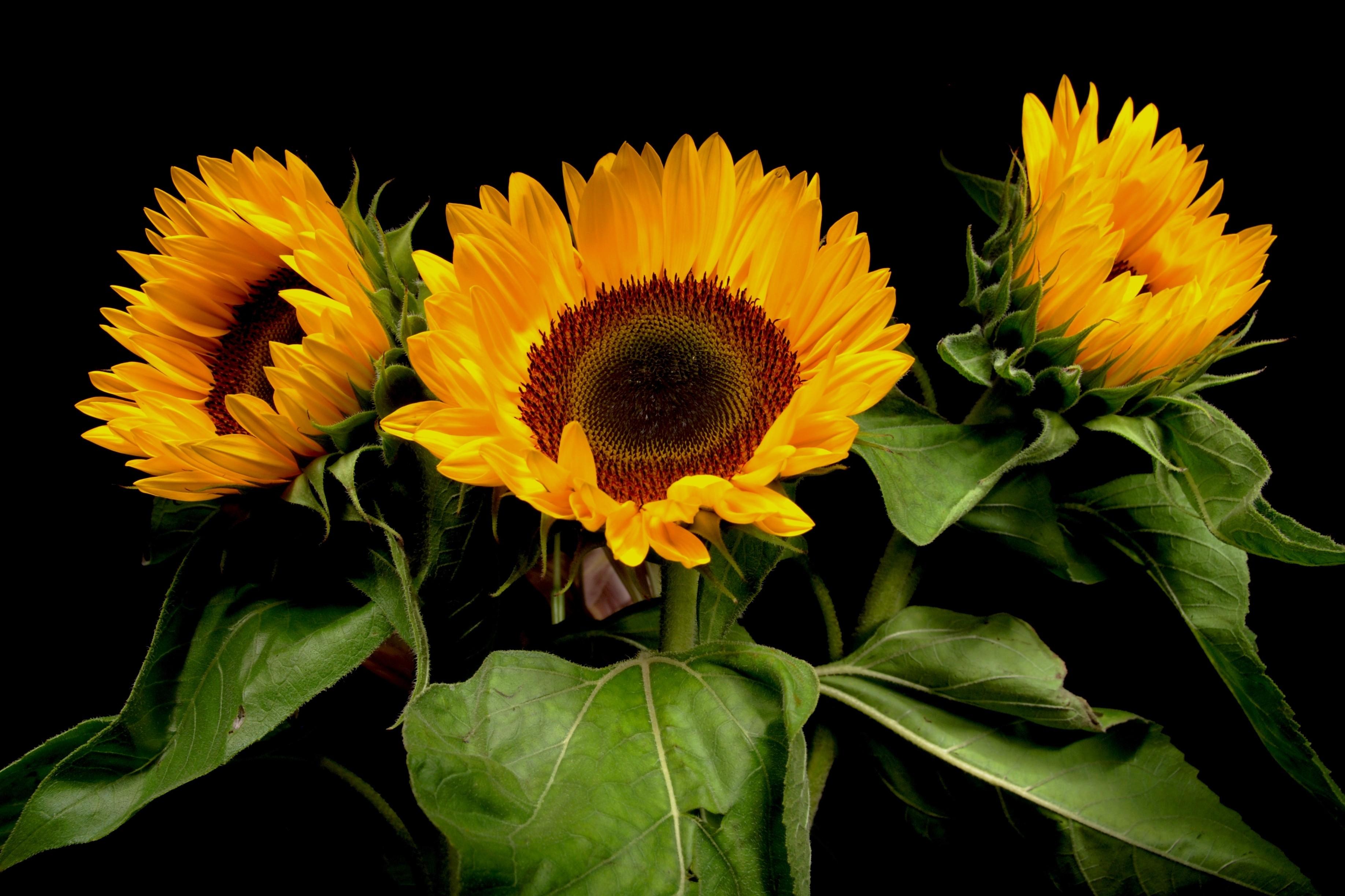 подарочные ножи фото цветов на черном фоне высокого качества жидкими обоями