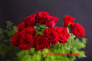 Photo free greeting card, roses, rose