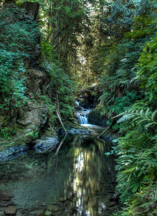 Фото бесплатно водопад, лес, деревья - на рабочий стол