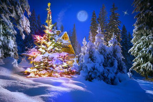 Photo free winter, new year, Christmas tree