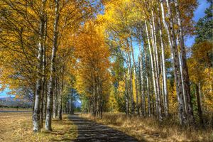 Бесплатные фото осень,дорога,лес,деревья,пейзаж,краски осени,осенние краски