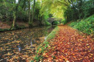 Бесплатные фото осень,парк,лес,канал,мост,деревья,тропинка
