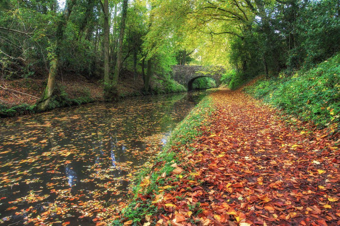 Фото бесплатно осенние цвета, канал, деревья - на рабочий стол