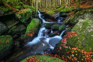 Бесплатные фото осень,водопад,лес,деревья,камни,мох,листва