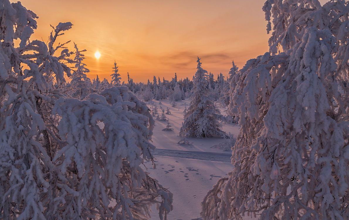 Фото бесплатно Салехард, дерева, лесотундра - на рабочий стол