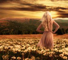 Фото бесплатно закат, поле, одуванчики