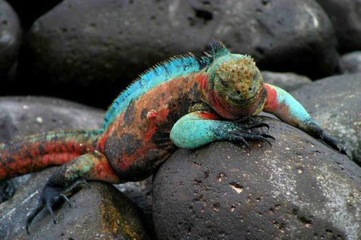 Wildlife Ecuador