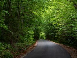Фото бесплатно лесная дорога, деревья, природа