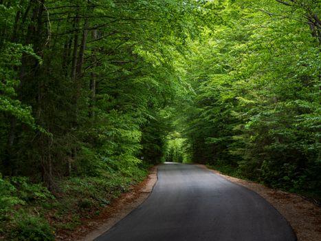 Заставки лесная дорога, деревья, природа
