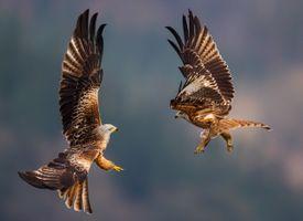 Фото бесплатно птицы, географический, зеленый