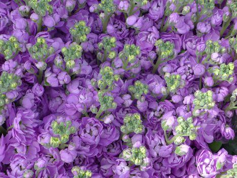 Бесплатные фото цветы,розы,много