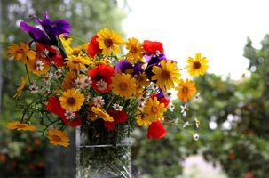 Фото бесплатно лето, букет, цветы