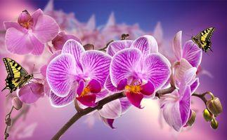 Бесплатные фото орхидея,цветок,цветы,ветка,бабочка,флора