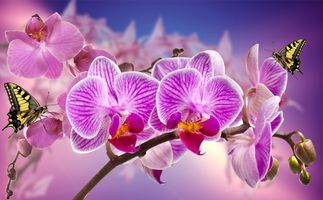 Фото бесплатно орхидея, цветок, цветы, ветка, бабочка, флора