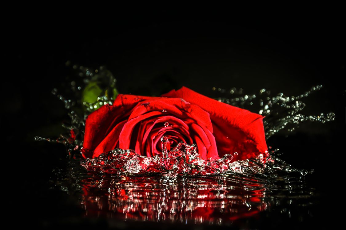 Фото бесплатно роза, жидкость, вода, цветок, брызги, флора, макро, цветы