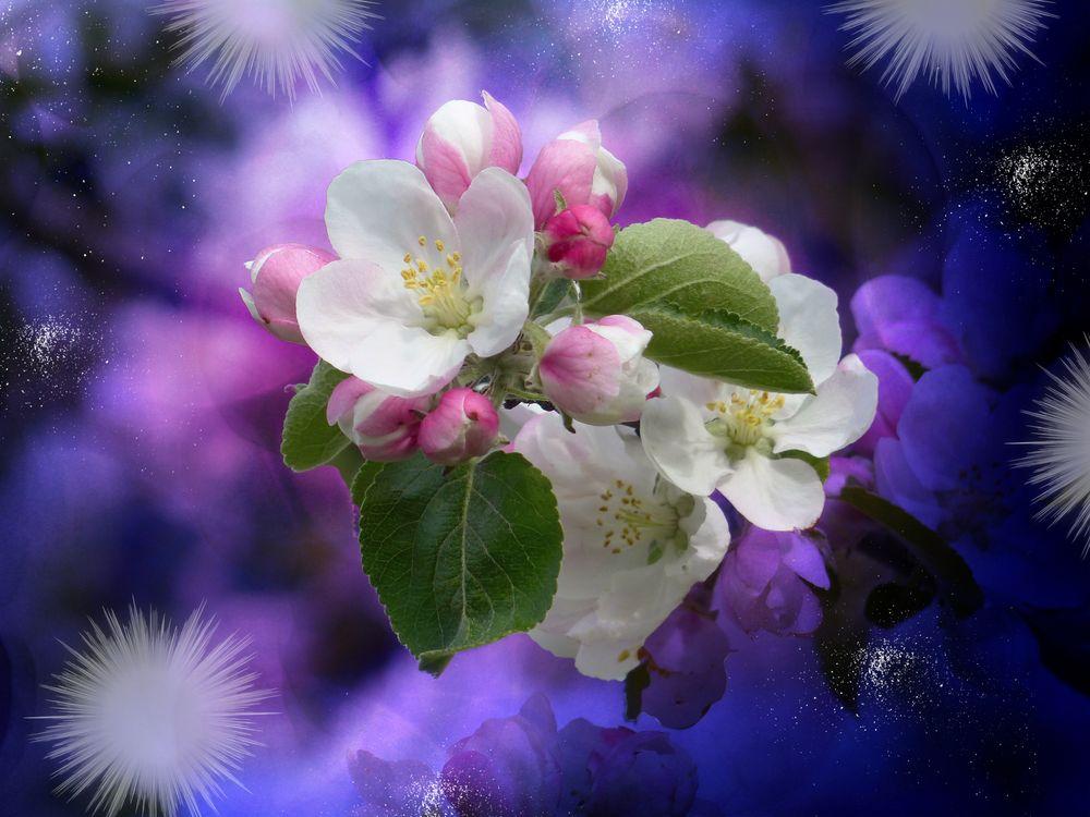 Яблони в цвету · бесплатное фото