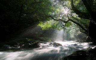 Фото бесплатно лес, ручьи, для