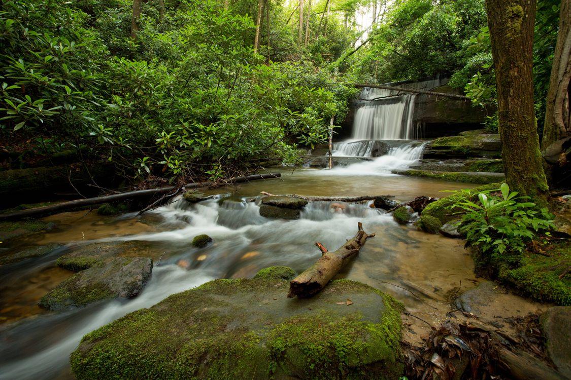 Ручей с порогами в лесу · бесплатное фото