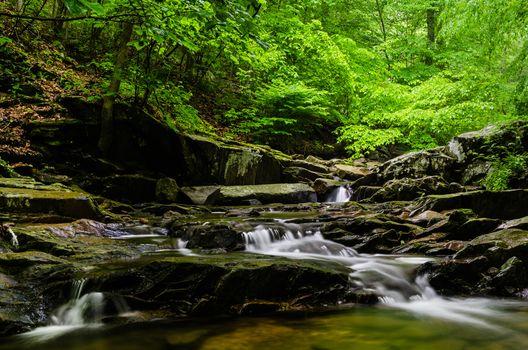 Фото бесплатно Patapsco Valley State Park, лес, река