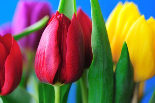 Самые красивые тюльпаны · бесплатное фото
