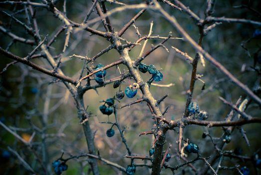Заставки осень, ветки, фрукты