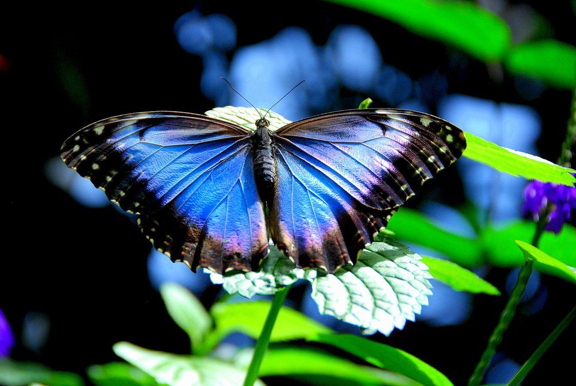 Цветок и бабочка · бесплатное фото