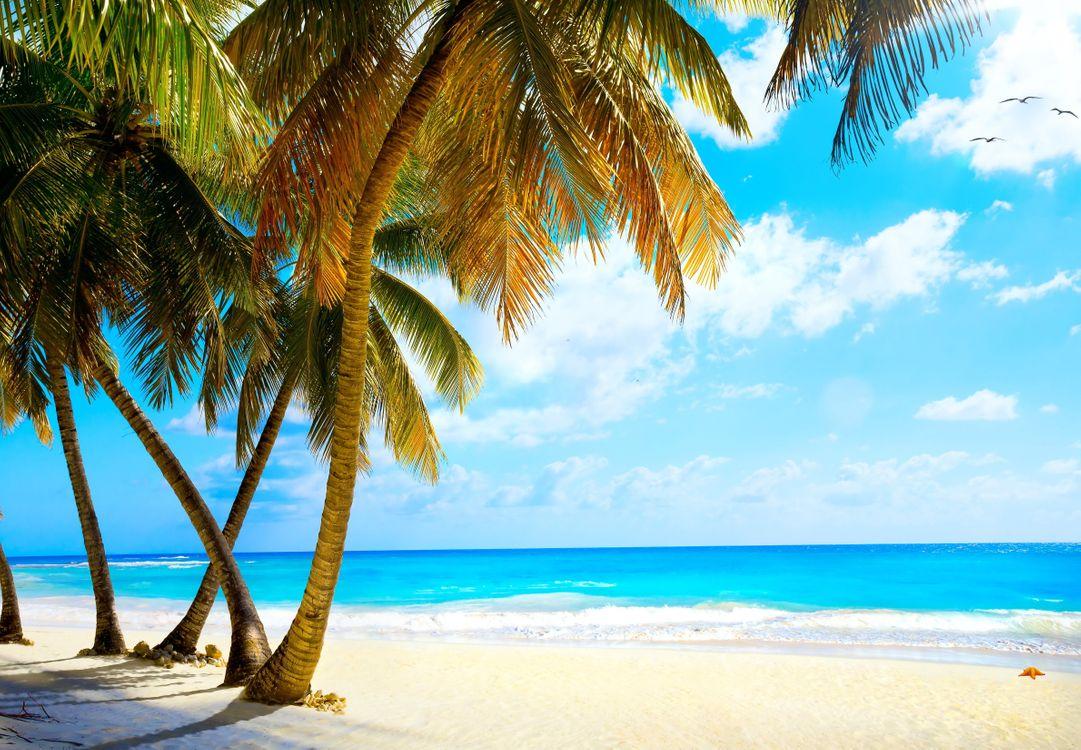 Песок и пальмы · бесплатное фото