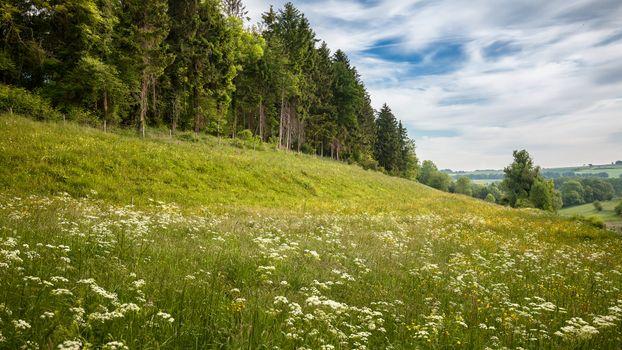 На лесной опушке · бесплатное фото