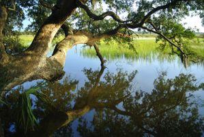 Бесплатные фото Река,вода,деревня,дерево,над рекой,отражение,тростник