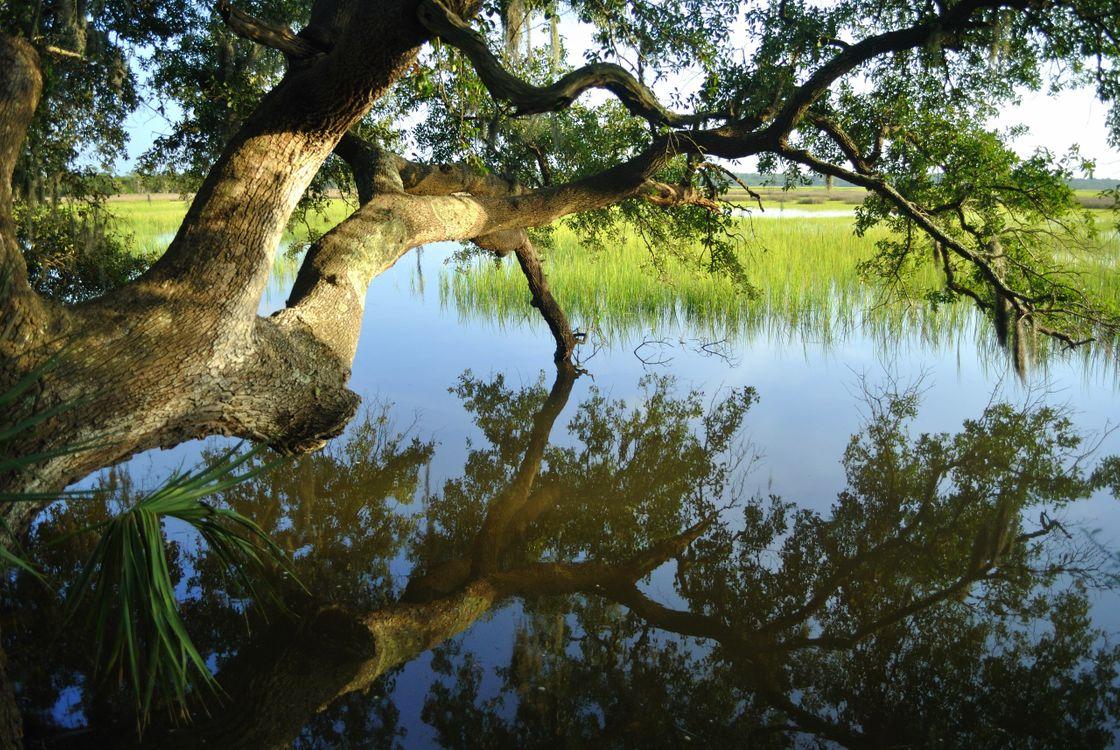 Фото бесплатно Река, вода, деревня, дерево, над рекой, отражение, тростник, природа