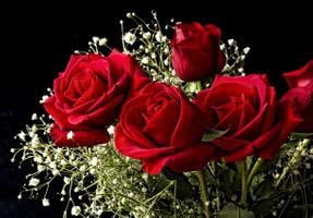Фото бесплатно розы, букет, цветы