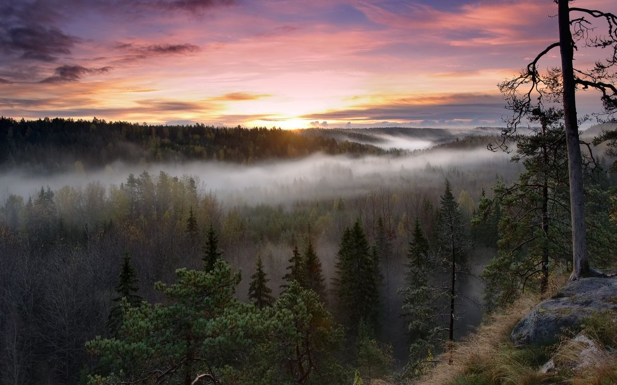 Обои облака, туман, лес картинки на телефон