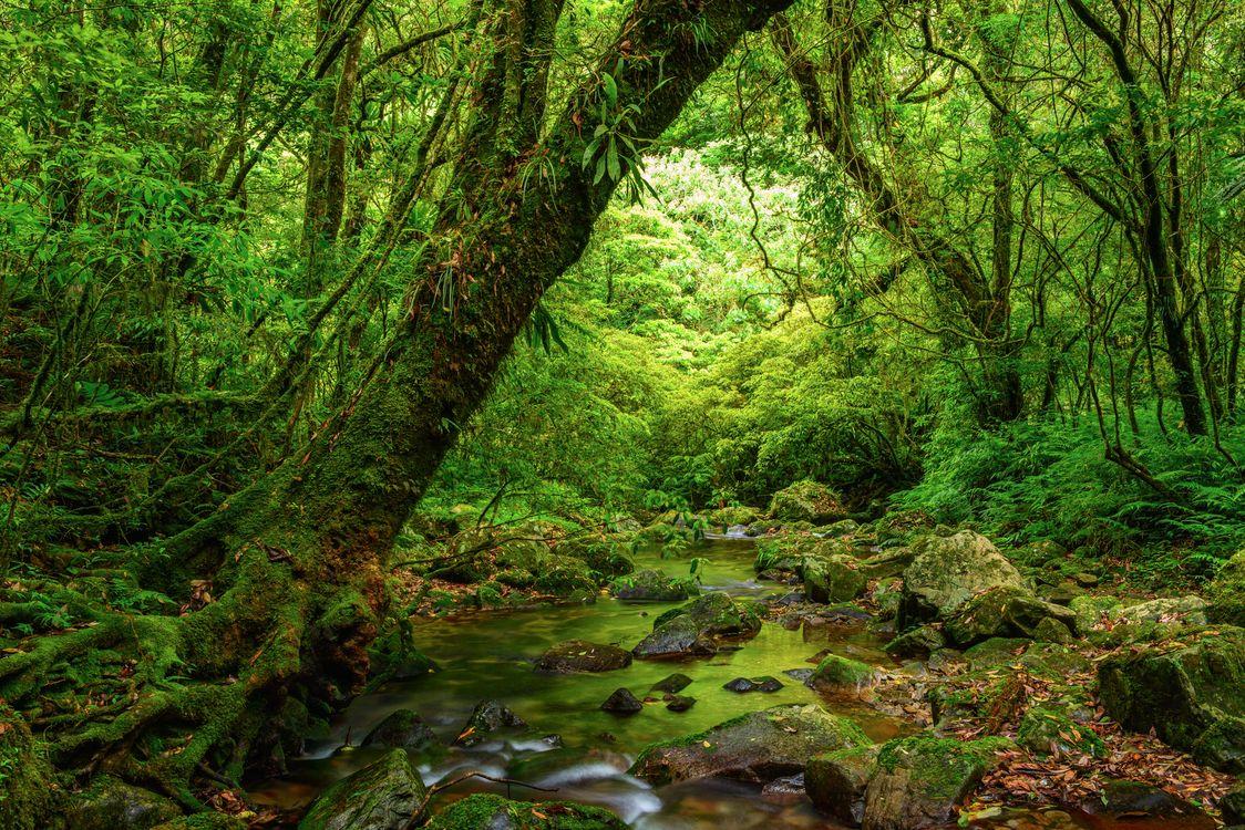 Фото бесплатно лес, деревья, камни, речка, река, природа, пейзаж, пейзажи