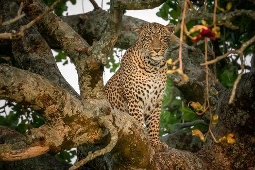 Гепард на дереве · бесплатное фото