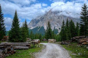 Photo free trees, Ehrwald, Austrian Alps