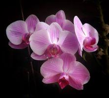 Букет из орхидей на черном фоне