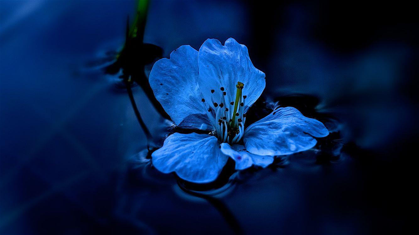 Фото бесплатно вода, цветок, жидкость, макро, макро