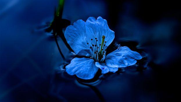 Фото бесплатно вода, цветок, жидкость