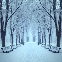Бесплатные фото зима,парк,дорога деревья,снег,лавочки,пейзаж