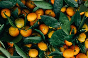 A bunch of oranges with leaves